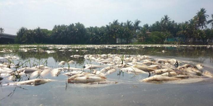 Retiran pescadores 3 toneladas de peces muertos de Barra de Pichi