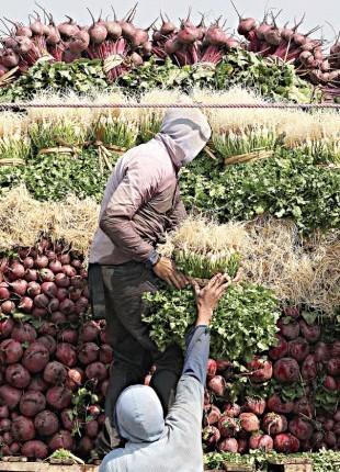 EEUU prohíbe cilantro mexicano por contaminación con heces