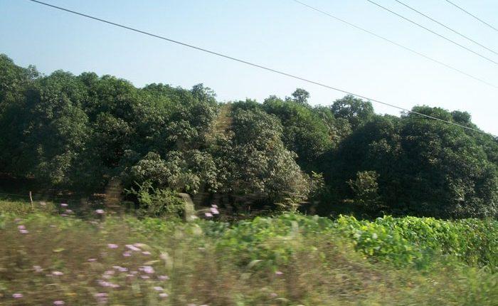 Tierras de cultivo serán afectadas por la ZEE