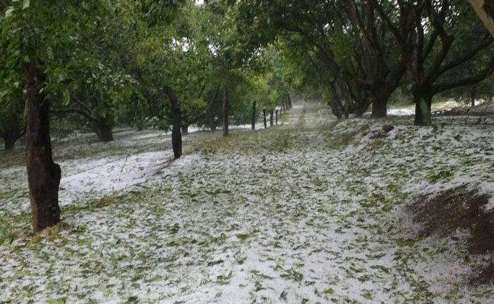 Fuerte granizada causa daños a aguacate en Los Reyes