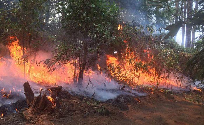 Incendio se expande a bosques de La Palma