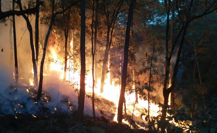 Incendio consume zona reforestada en Peribán