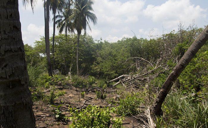 Crecimiento de LC provoca destrucción de manglares